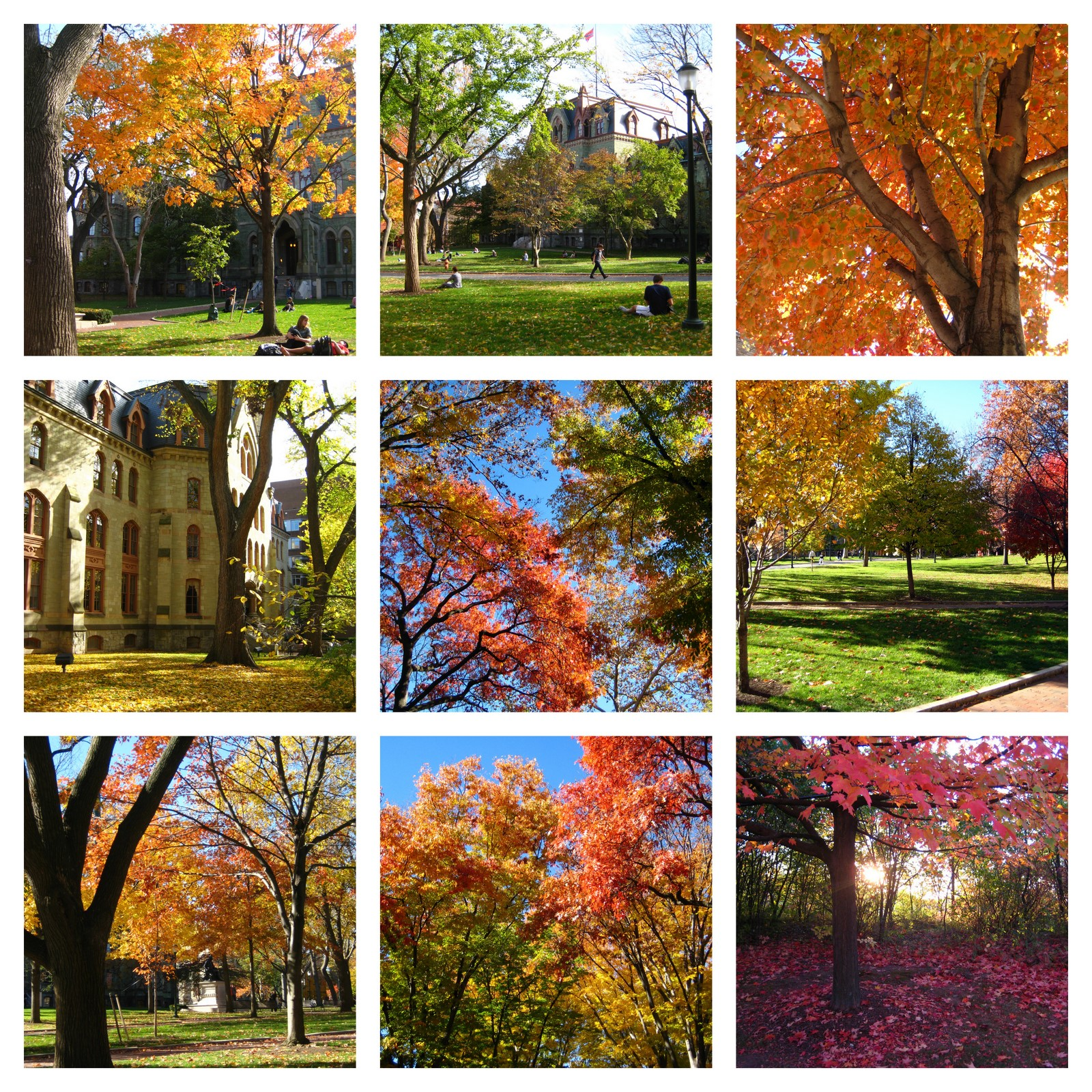 fall colors collage