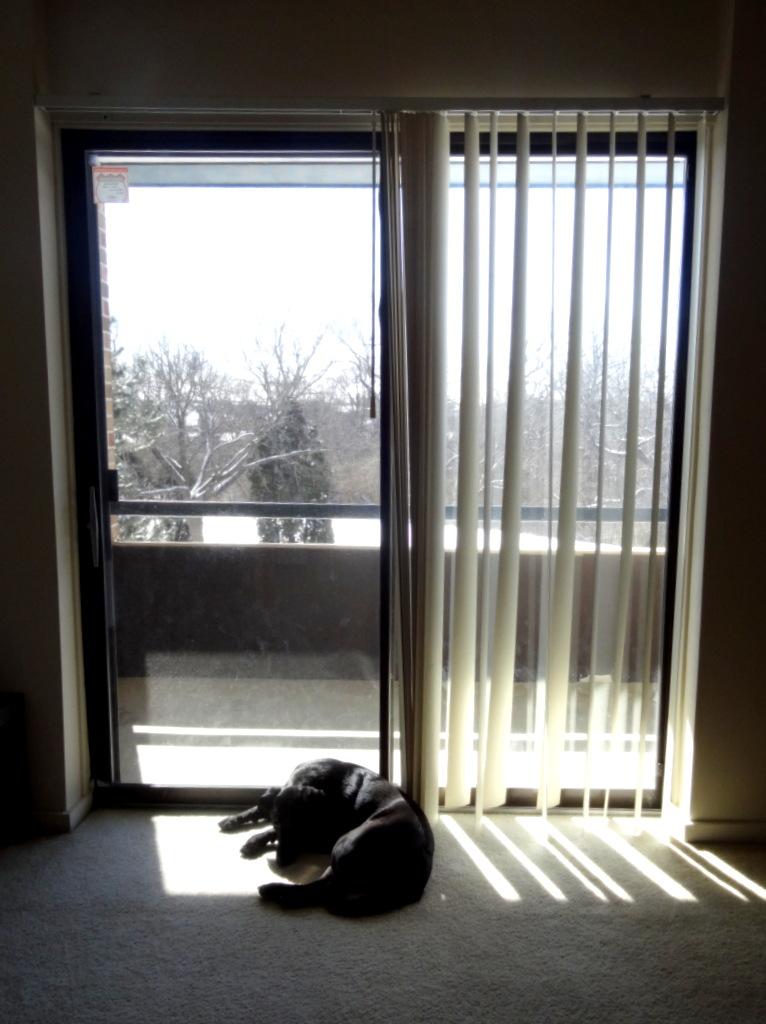 Phoebe's sunny spot